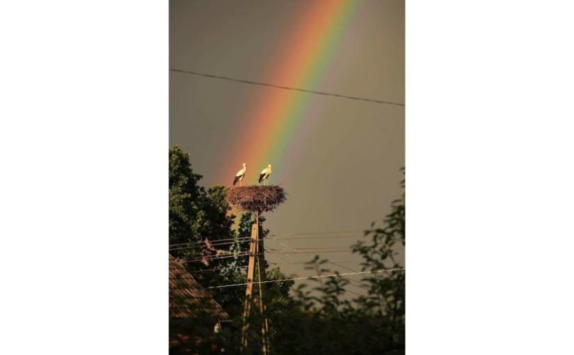 Regenbogen mit Störchen